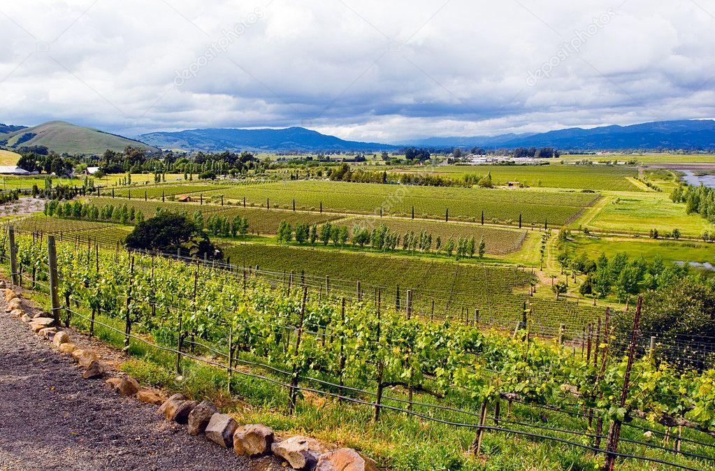 Landscape in california for Landscaping rocks stockton ca
