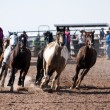 Rodeo horses — Stock Photo