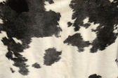 Cowhide — Stock Photo