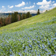Alpine wildflower landscape — Stock fotografie