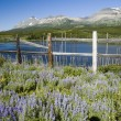 wildflowers in glacier national park — Stock Photo