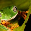 Stock Photo: Monkey Frog