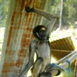 Stock Photo: Spider monkey