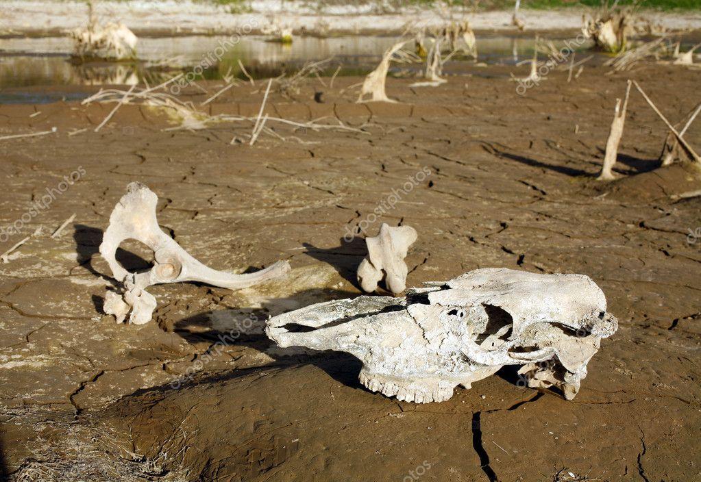 动物的骨骼 — 图库照片