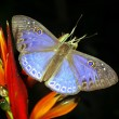 Butterfly — Stock Photo #2392859