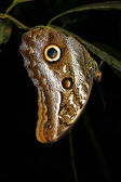 Roosting butterfly — Stock Photo