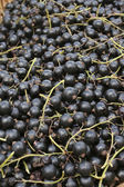 Bunch of Black currants — Stock Photo
