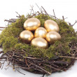 Golden eggs in bird nest over white - Stock Photo