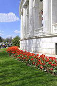 Red tulips by marble building — Stock Photo