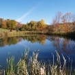 Tranquil pond — Stock Photo #2469579