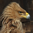 Stock Photo: Krstas eagle,