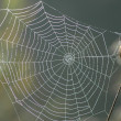 Spiderweb — Stock Photo