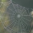 Spiderweb — Stock Photo #2471712