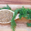 Dill Seed and Weed — Stock Photo