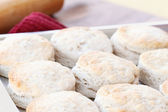 Buttermilk Biscuits — Stock Photo