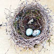 Nest and Eggs - Stock Photo
