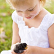 Child Holdin a Baby Chick — Stock Photo