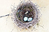 Nest and Eggs — Stok fotoğraf