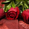 Long Stem Red Roses — Stock Photo