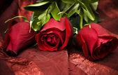 Long Stem Red Roses — Stock Photo