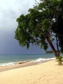 Tree on beach — Stock Photo