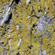 Background closeup bark — Stock Photo #2375113