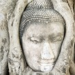 Thai Buddha Head — Foto Stock #2391282