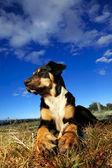 Dog with bone. — Stock Photo