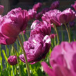 Stockfoto: Close up of purple flowers