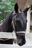 Posing Horse — Stock Photo