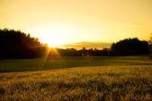 Sunset glow — Stock Photo