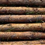 Pine wood stack — Stock Photo