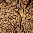 Wood cut texture — Stock Photo