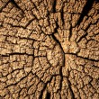 Stock Photo: Wood cut texture