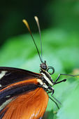 Butterfly close up — Stock Photo
