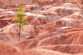 Badlands with tree — Stock Photo