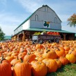 Pumpkin Farm — Stock Photo