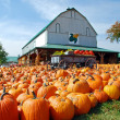 Stock Photo: Pumpkin Farm