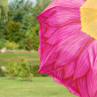 Colorful  flower umbrella in a park — Stock Photo