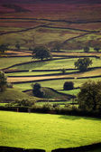 Yorkshire dales in evening sunlight — Stock Photo