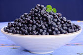 Blueberry bowl — Stock Photo