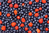 Colorful mix of fresh berries — Stock Photo