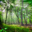 Enchanted forest — Stock Photo