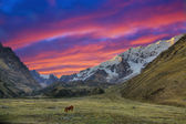 Evening in the Andes — Stock Photo