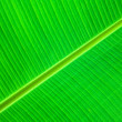 Green leaf detail — Foto de Stock