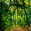 Trail in the woods — Stock Photo