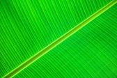 Green leaf detail — Stock Photo
