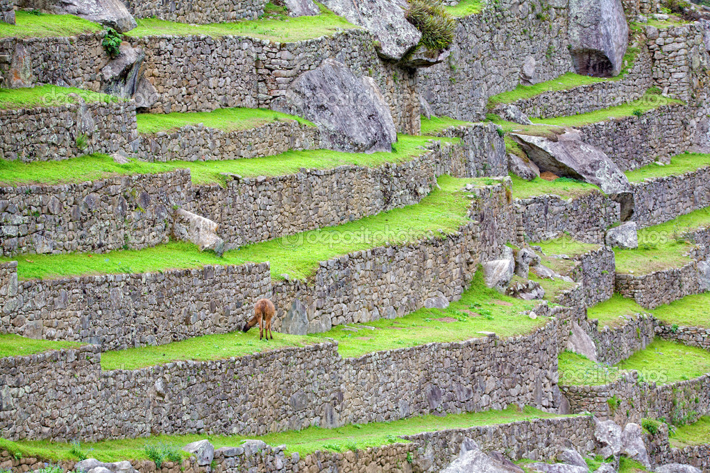 Terraces and ruins of ancient Inca city at Machu Picchu, Peru — Stock Photo #2395269