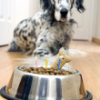 Royalty-Free Stock Photo: My best friend\'s birthday