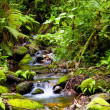 Creek in rainforest - Stock Photo